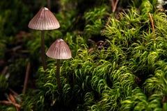 Champignons sur le plancher de forêt Image libre de droits