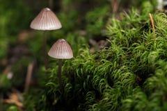 Champignons sur le plancher de forêt Photographie stock libre de droits