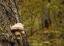 Champignons sur le tronc de l'arbre photo stock