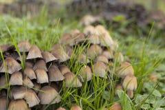 Champignons sur une herbe verte Image libre de droits