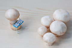Champignons on training Royalty Free Stock Photos