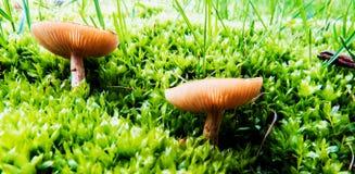Champignons vibrants aux petites usines/herbe photo stock