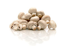 Champignons on a white background with reflection Royalty Free Stock Photo