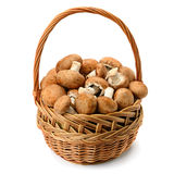 Champignons in wicker basket isolated on white background. Stock Photography