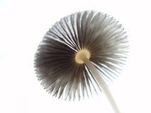 champinjon royaltyfria foton