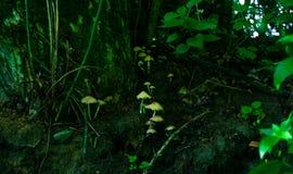 champinjon Royaltyfria Bilder