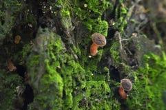 Champinjon bland moss royaltyfri foto