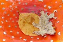 champinjon för höstclosefluga upp Royaltyfria Bilder