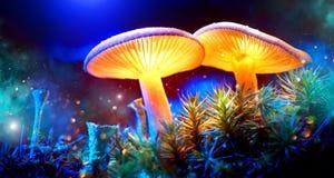 champinjon Glödande champinjoner för fantasi i gåtamörkerskog Arkivbild