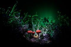 champinjon Glödande champinjoner för fantasi i mörk skognärbild för gåta Amanitamuscaria, flugsvamp i mossa i skogmagimushroo Royaltyfri Bild