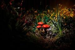 champinjon Glödande champinjoner för fantasi i mörk skognärbild för gåta Amanitamuscaria, flugsvamp i mossa i skogmagimushroo Arkivbild