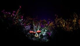 champinjon Glödande champinjoner för fantasi i mörk skognärbild för gåta Amanitamuscaria, flugsvamp i mossa i skogmagimushroo Royaltyfria Bilder