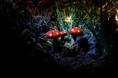 champinjon Glödande champinjoner för fantasi i mörk skognärbild för gåta Amanitamuscaria, flugsvamp i mossa i skogmagimushroo Fotografering för Bildbyråer