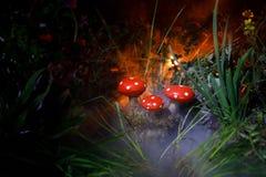 champinjon Glödande champinjoner för fantasi i mörk skognärbild för gåta Amanitamuscaria, flugsvamp i mossa i skogmagimushroo Arkivbilder