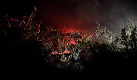 champinjon Glödande champinjoner för fantasi i mörk skognärbild för gåta Amanitamuscaria, flugsvamp i mossa i skogmagimushroo Arkivfoton