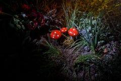 champinjon Glödande champinjoner för fantasi i mörk skognärbild för gåta Amanitamuscaria, flugsvamp i mossa i skogmagimushroo Royaltyfri Foto