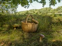 Champinjon i den edulis forestBoletusen Royaltyfria Foton