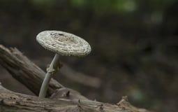 Champinjon i höstskog på träträd royaltyfria bilder