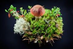 Champinjon i mossa med tranbärskogblandningen Royaltyfri Foto
