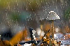 Champinjon i regn Arkivbild