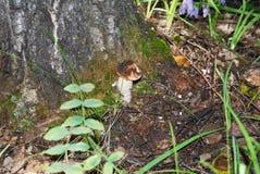 Champinjon i skog royaltyfri foto