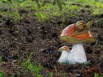 Champinjon i trädgård arkivbilder