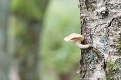 Champinjon på en trädstam Arkivfoton