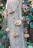 Champinjon på stammen av trädet Arkivfoton