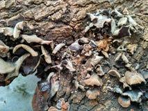 Champinjon på trä som under-vattenbilder Royaltyfri Bild