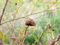 Champinjon-se Odd Plant Structure i mitt Arkivfoto