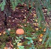 Champinjon skog, bladnedgång, träd fotografering för bildbyråer