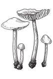 Champinjon vektor, teckning, gravyr, illustration som är liten, familj, grupp som är mycket liten Royaltyfri Illustrationer
