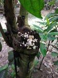 Champinjonbild Ett träd med champinjonen arkivbild