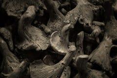 Champinjoner Arkivbild