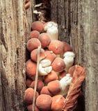 Champinjoner i en gammal stubbe av trädmyceliumen Armillaria Arkivbilder