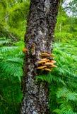 Champinjoner i en skog Royaltyfria Foton