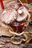 Champinjoner i röd korg Arkivfoton