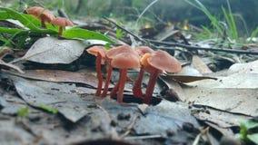 Champinjoner i skogen Royaltyfri Foto