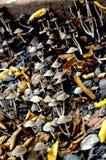 Champinjoner i skogen med sidor Royaltyfria Foton