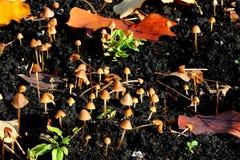 Champinjoner i trädgård arkivbilder