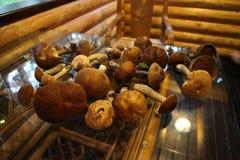 Champinjoner ligger på en exponeringsglastabell i ett trähus arkivfoto