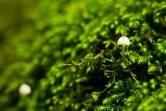 Champinjoner och Moss Royaltyfria Foton