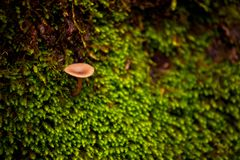 Champinjoner och mossa i skogen Royaltyfri Foto