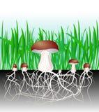 Champinjoner och vegetation. Svamp. Mycelium. Spor Royaltyfri Fotografi