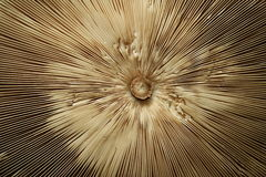 champinjonett slags solskydd Royaltyfria Foton