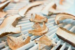 Champinjonförberedelse i tork Säsongnärmare detalj Arkivfoton
