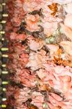 Champinjonrosa färgblomning Arkivbild
