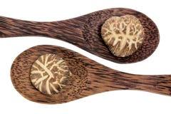 champinjonshitake skedar trä Arkivfoto