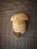 Champinjonsopp över träbakgrund Arkivbild