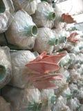 Champinjonväxter Royaltyfria Foton